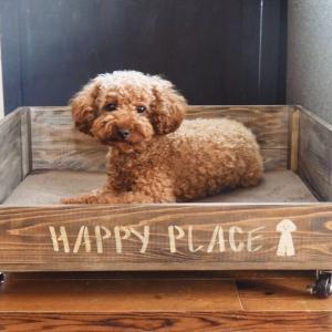 【犬のベッドをDIY】100均すのこでワンコのひんやり冷たいベッドの作り方!~組立・塗装編~