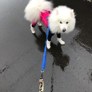 雨のお散歩は