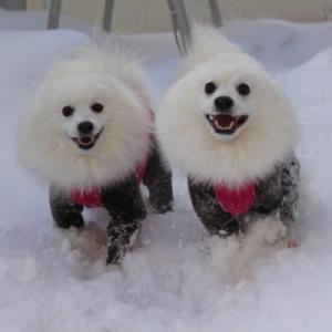 ふわふわ雪にもぐりまくり♪