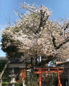 桜花と桜餅