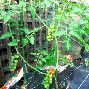今年は遅めの・・・家庭菜園
