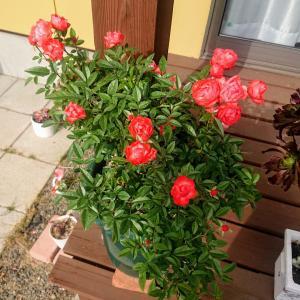 今日のわが家の植物たち&ビータロウ。。☆