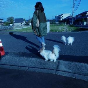 お昼のお散歩