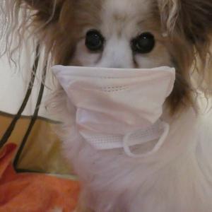 新型コロナウイルス感染防止をするらぁちゃん?
