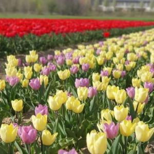 ミラネーゼに大人気、春の癒しの場所♪