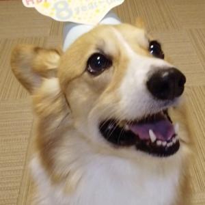 ハッピーバースデー しめじ! スペシャルケーキとおもちゃでお祝いするょ!