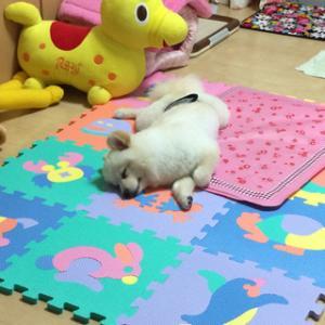 遊び疲れでおやすみなさい
