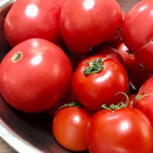 トマトソース レシピ!! 気軽に作ろ!