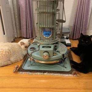 我が家の次女(白猫)の事情