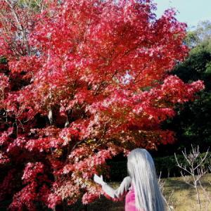 ふるさと公園の紅葉