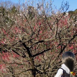 赤塚山公園の散策