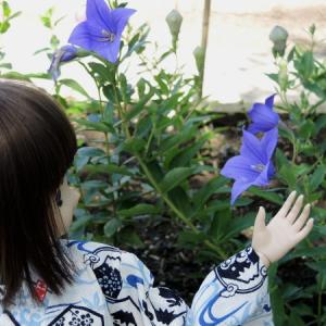 香勝寺のききょう園