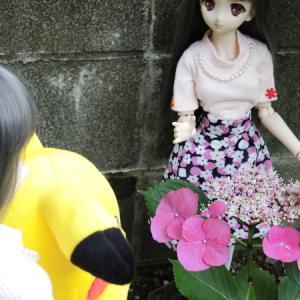 あじさいのお花見