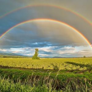 【あなたの天啓を受け取ろう♪】土用が明ける日は個人により異なる