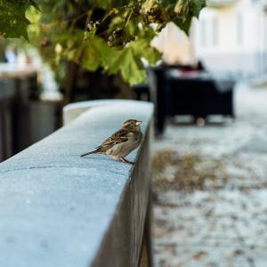 【カバラの魔法 131】鳥は精霊の声を伝えています。