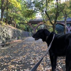 遊歩道の紅葉を楽しみました