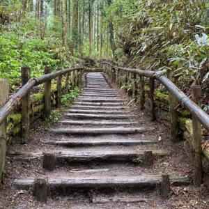 金剛山ハイキング