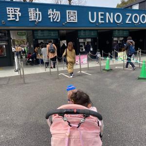 上野動物園に行きました