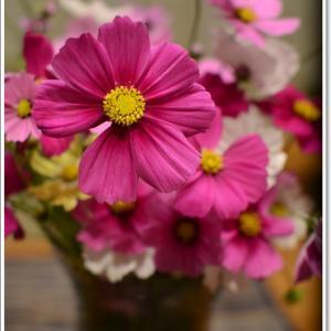 コスモスの花に囲まれて~♪