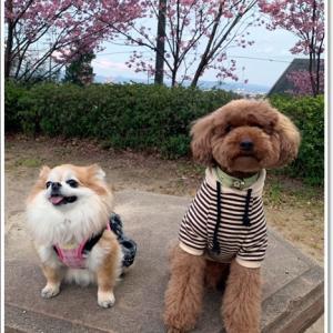ベリのお友達と散歩~♪