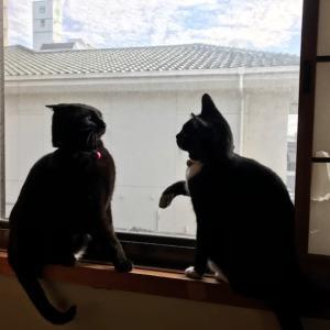 窓際の2匹