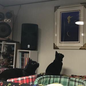 天井裏でゴトゴト