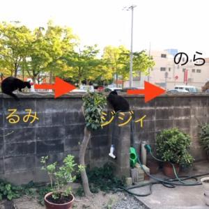 塀の上のねこねこ