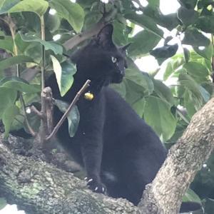 ジジィの木登り