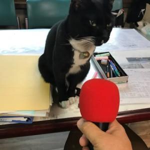 インタビューをしてみました