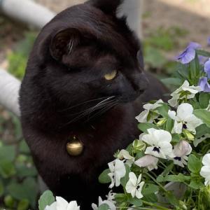 お花の向こうは