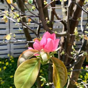 春の陰と陽