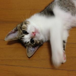 子猫物語②