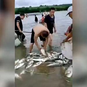 【動画】中国、ダム放水で大量の魚も流出!例によって村民集まり「さあ、漁だ!」 [海外]