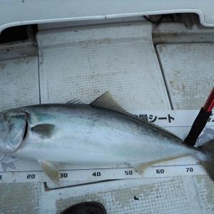 ブリ釣り 6戦目