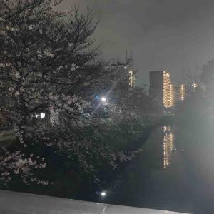 3月31日夜ラン5.5㎞金城橋