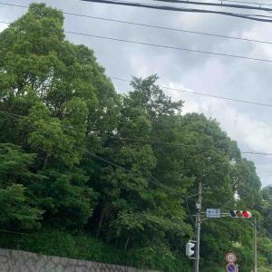 6月21日朝ラン30㎞篠ノ風一丁目