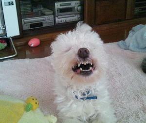 歯みがきしない男