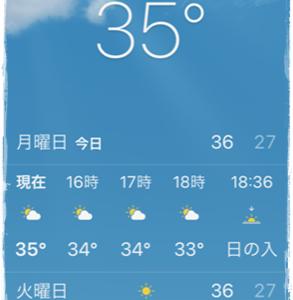 気温35度の中トリミングへ