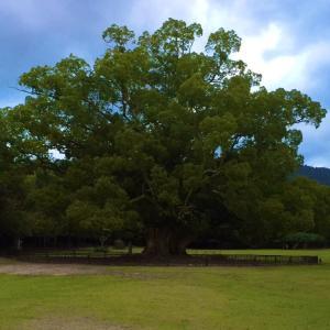 この木なんの木ではなくて