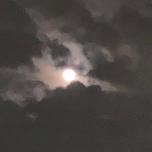 中秋の名月の次の日ですが