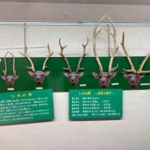 鹿さんの年齢