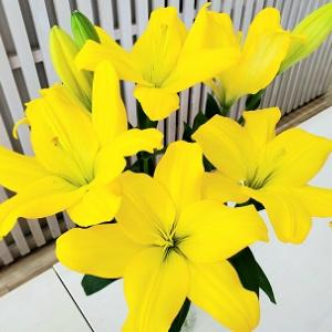頂いたお花が咲きました(^^)きれーい