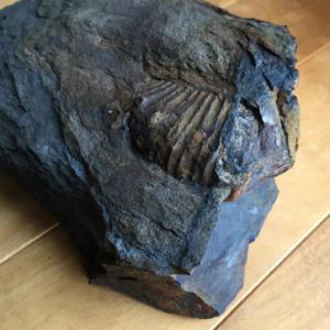 先達は、あらまほしき事なり。「化石を掘る (ちくま新書)」