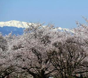 春爛漫、勝ち点満開、  サガン鳥栖戦(2)