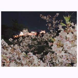 和歌山城の桜は今年も満開です。来年はゆっくりお花見できるはず