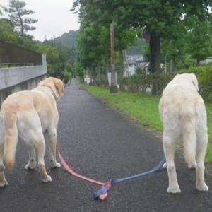 台風ですが 朝散歩も午後散歩もOKでした