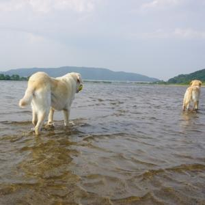 夏日が続きますから 行先は川