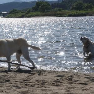 川面キラキラ