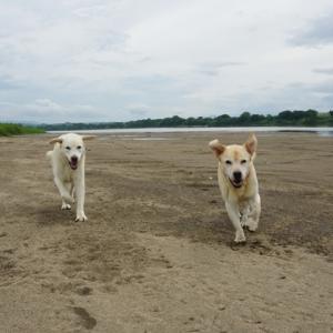 河原で遊ぶ=泥だらけ