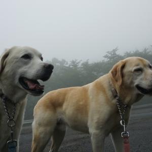 霧の中を歩きます